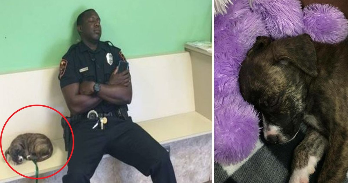 vvv 4.jpg?resize=1200,630 - A Cop, After His 12-hour Shift, Helps An Abandoned Pup Find A New Home
