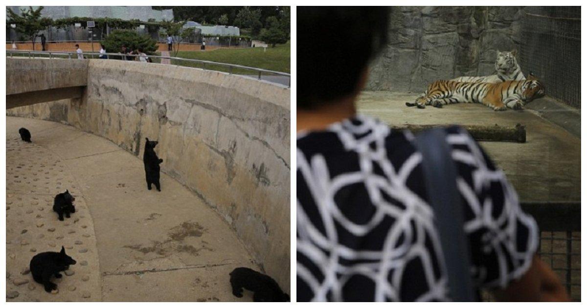 zoo.jpg?resize=412,232 - Cena perturbadora em um zoológico da Coréia do Norte
