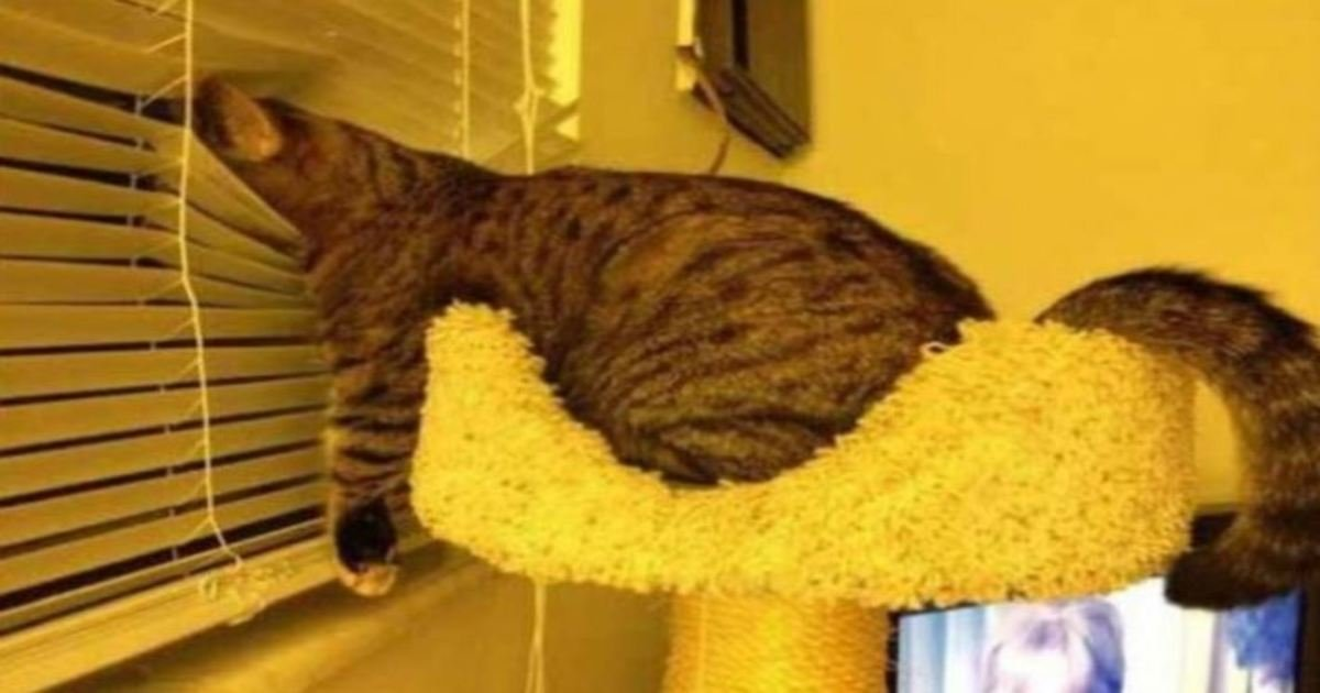 1 108.jpg?resize=1200,630 - 20 Hilarious Photos Showing That Animals Can Fall Asleep Literally Anywhere