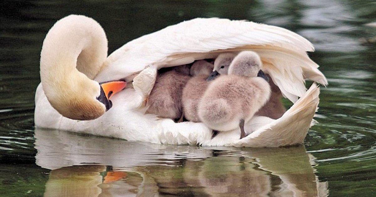 1 155.jpg?resize=1200,630 - 23 Madres del reino animal que nos conquistaron con su ternura