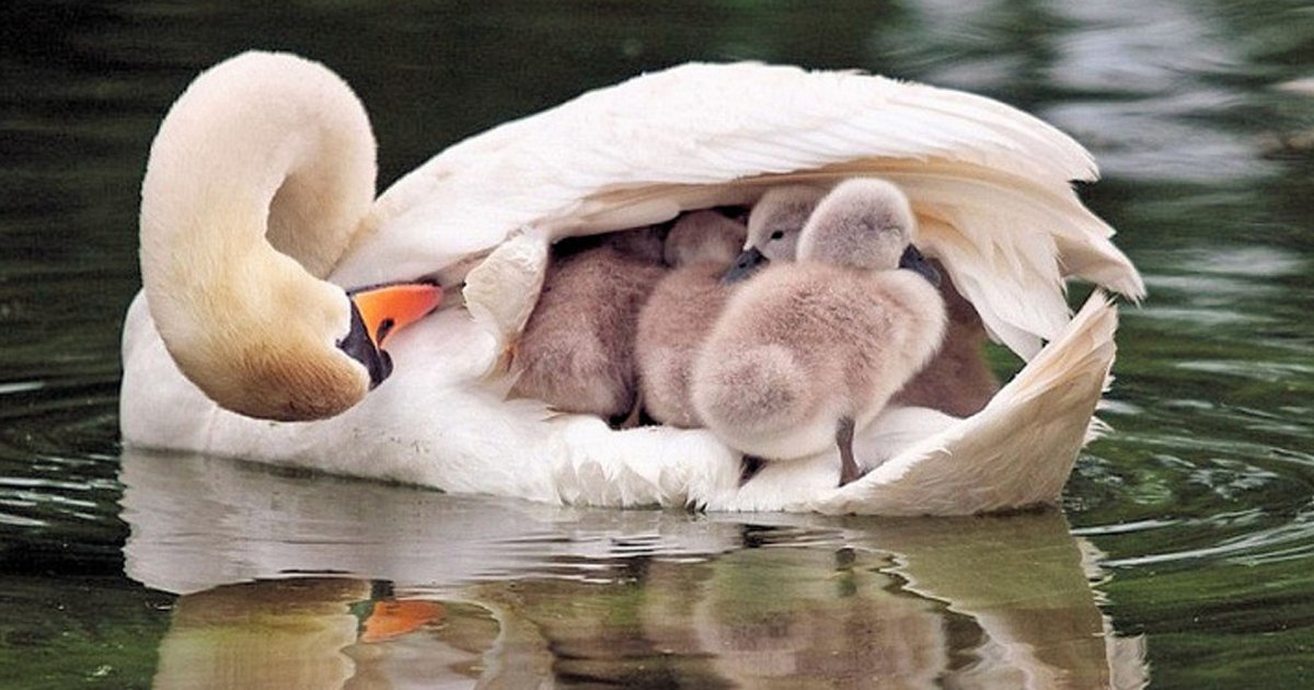 1 155.jpg?resize=636,358 - 23 Madres del reino animal que nos conquistaron con su ternura