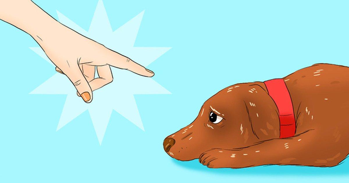 1 17.jpg?resize=1200,630 - Cosas perjudiciales que puedes estar haciéndole a tu perro sin siquiera darte cuenta