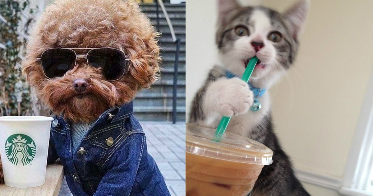 1 181.jpg?resize=636,358 - Here's What 21 Adorable Dogs and Cats Ordered at Starbucks