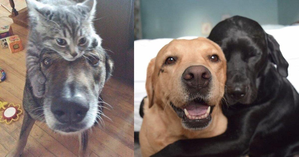 1 216 1.jpg?resize=1200,630 - 25 photographies qui prouvent que deux animaux domestiques valent mieux qu'un
