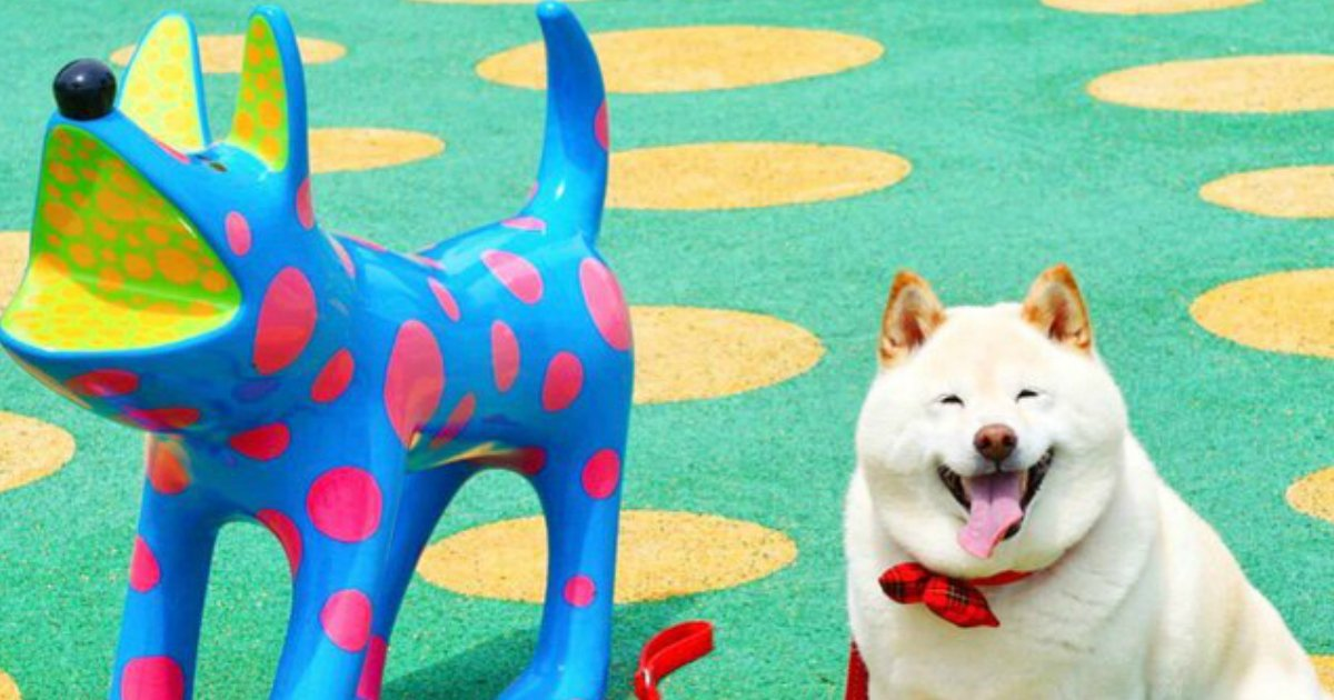 1 295.jpg?resize=1200,630 - These 18 Pets Will Make You LOL