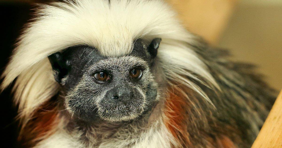 1 298.jpg?resize=1200,630 - 18 Animales que presumen sus gloriosos peinados obsequiados por la naturaleza misma