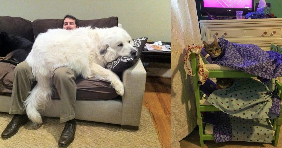 1 300.jpg?resize=1200,630 - Just 20 Photos Of The Happiest, Fluffiest Pets We've Ever Seen