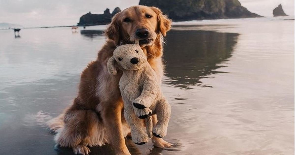 1 318.jpg?resize=1200,630 - 23 Perfect Dog Photos That Can Melt Any Cat Lover's Heart