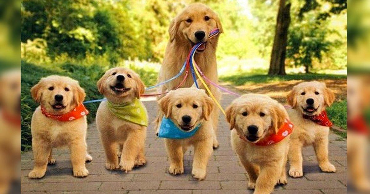 1 51.jpg?resize=1200,630 - 22 Fotos de animales que pueden hacer que cualquier día sea mucho más agradable