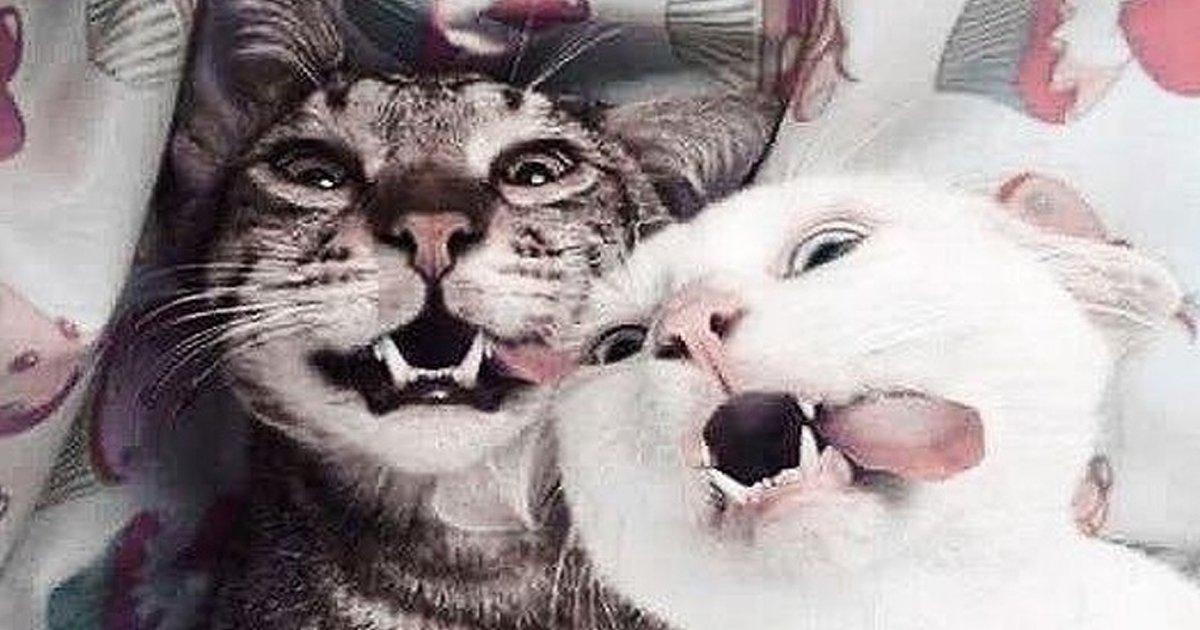 1 66.jpg?resize=1200,630 - 22 Momentos en los que nuestras mascotas parecieron humanos