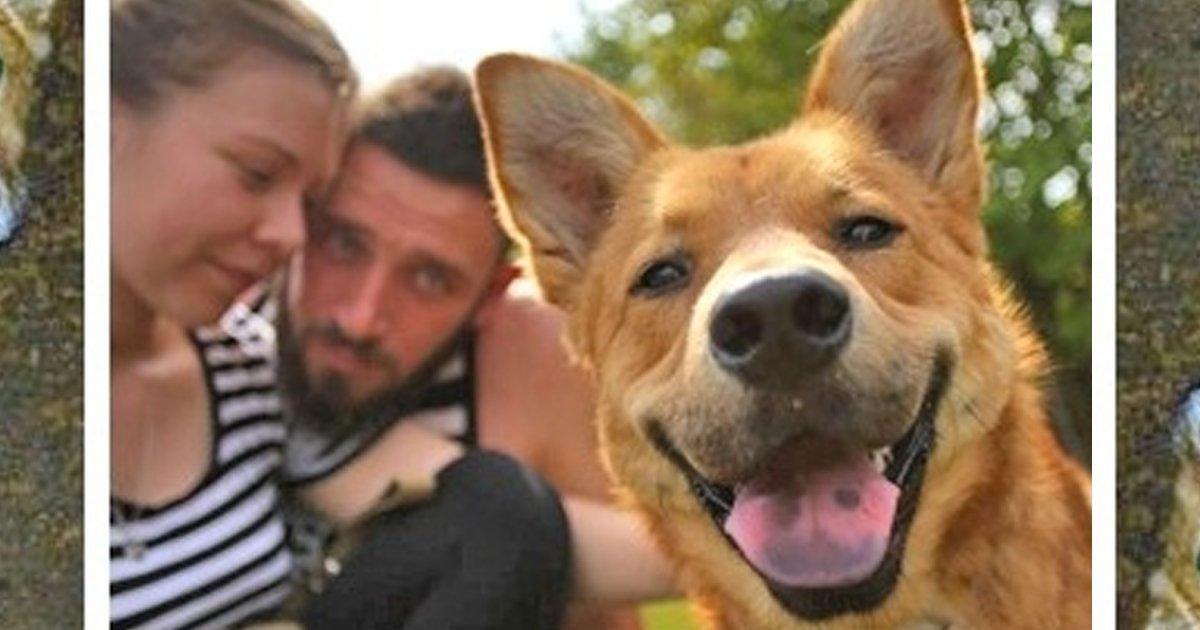 1 82.jpg?resize=636,358 - Estos perritos fueron adoptados de un refugio. El antes y después nos sorprendió a todos