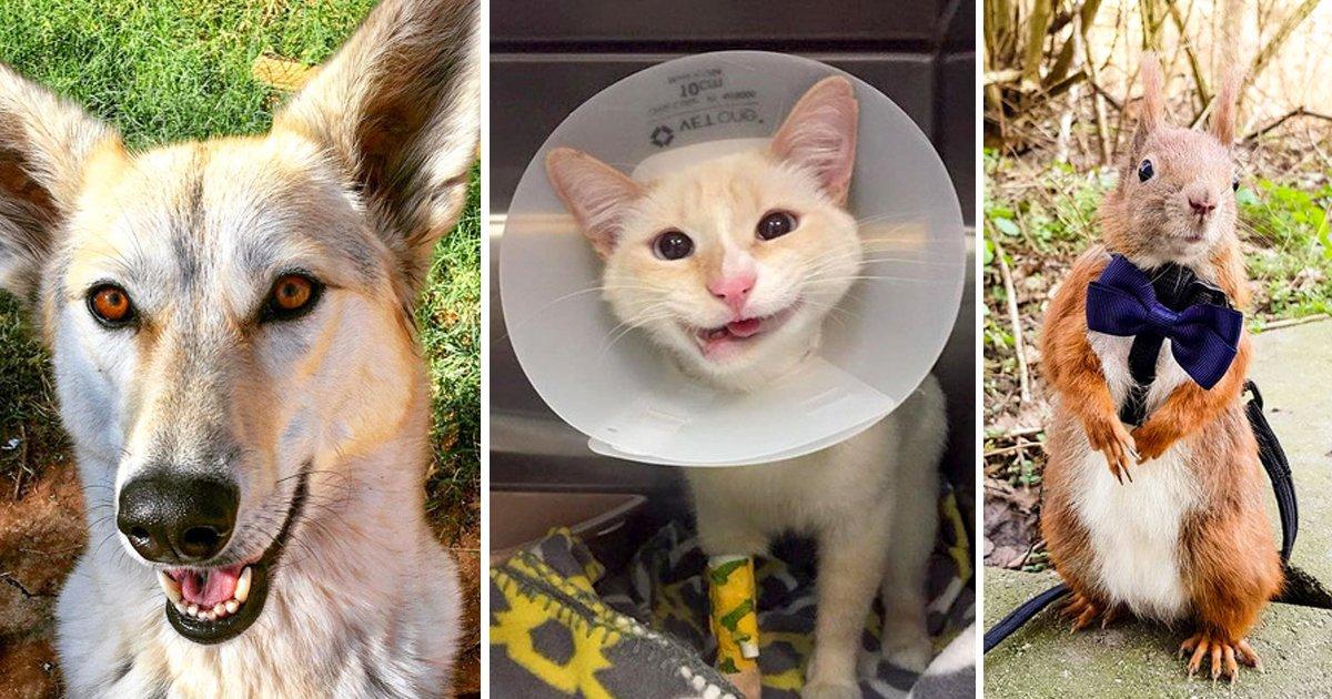 1 95.jpg?resize=1200,630 - Fotografías de animales rescatados que merecían una vida mejor y la recibieron