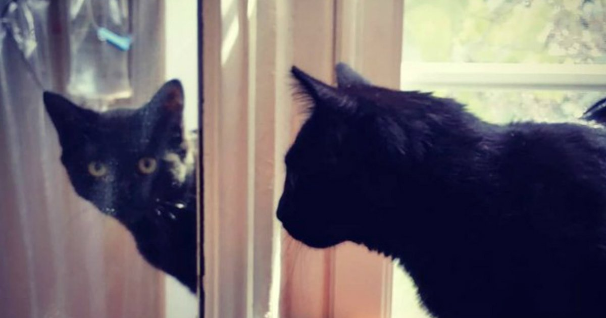 10 138.jpg?resize=1200,630 - 23 Cats Reacting Hilariously To Mirrors