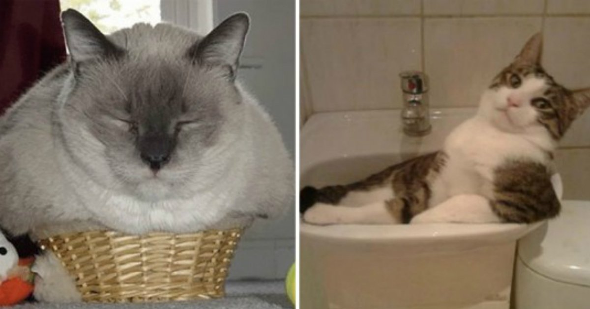 10 141.jpg?resize=1200,630 - If It Fits, I Sits: 18 Hilarious Photos Proving That Cats Are Liquid