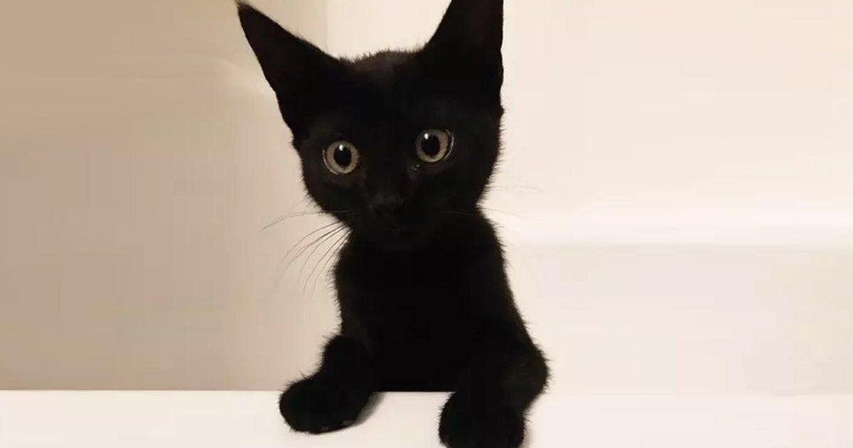 10 48.jpg?resize=636,358 - 17 motivos por los que nunca deberías adoptar un gato negro