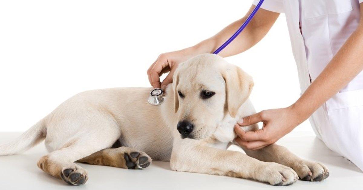 10 83.jpg?resize=636,358 - 이맘 때쯤 강아지들이 '동물병원'에 가는 이유