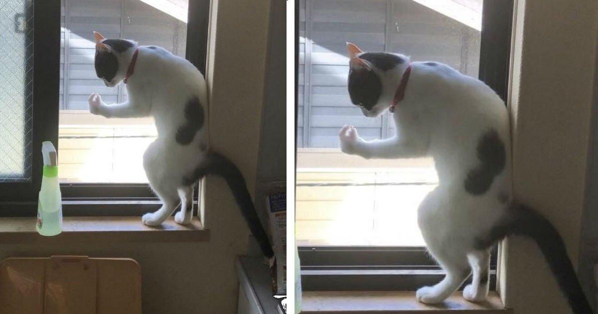 100 13 1.jpg?resize=412,232 - 22 chats aux situations étranges auxquelles nous ne pouvons pas résister