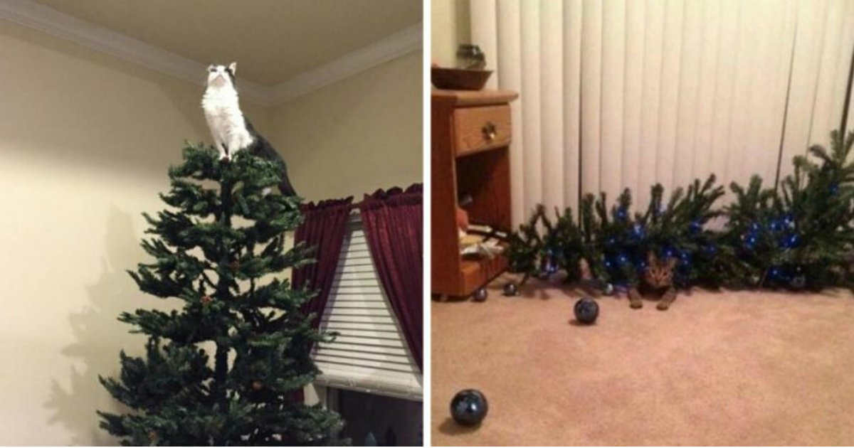 11 1.jpg?resize=1200,630 - 23 Cats Who Are So Happy Your Christmas Tree Is Finally Back Again