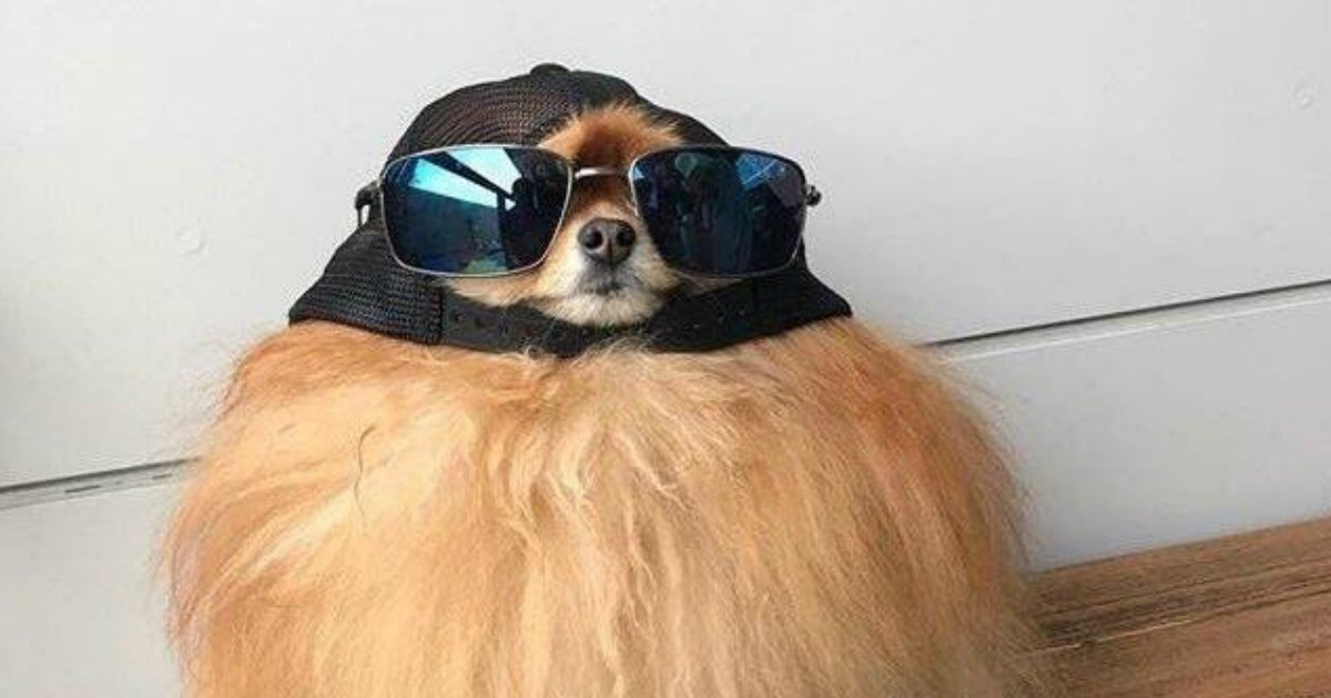 11 64.jpg?resize=1200,630 - Just 21 Dogs Looking Rad in Hats