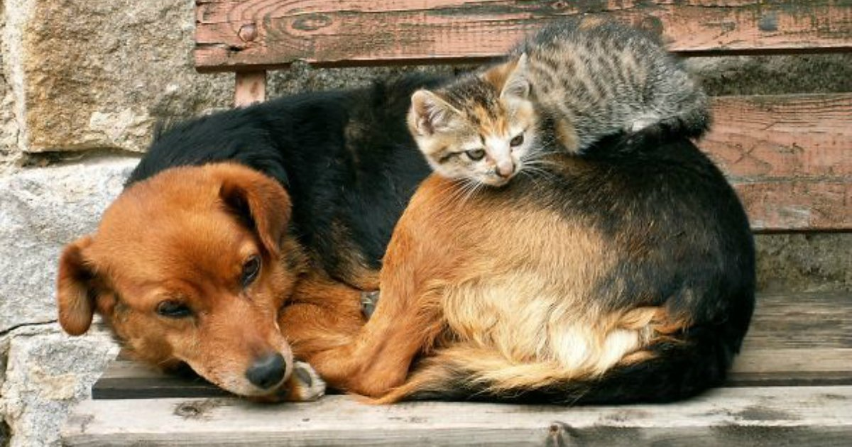 11 8.jpg?resize=1200,630 - 25 Cats Shamelessly Using Their Dog Friends As Pillows