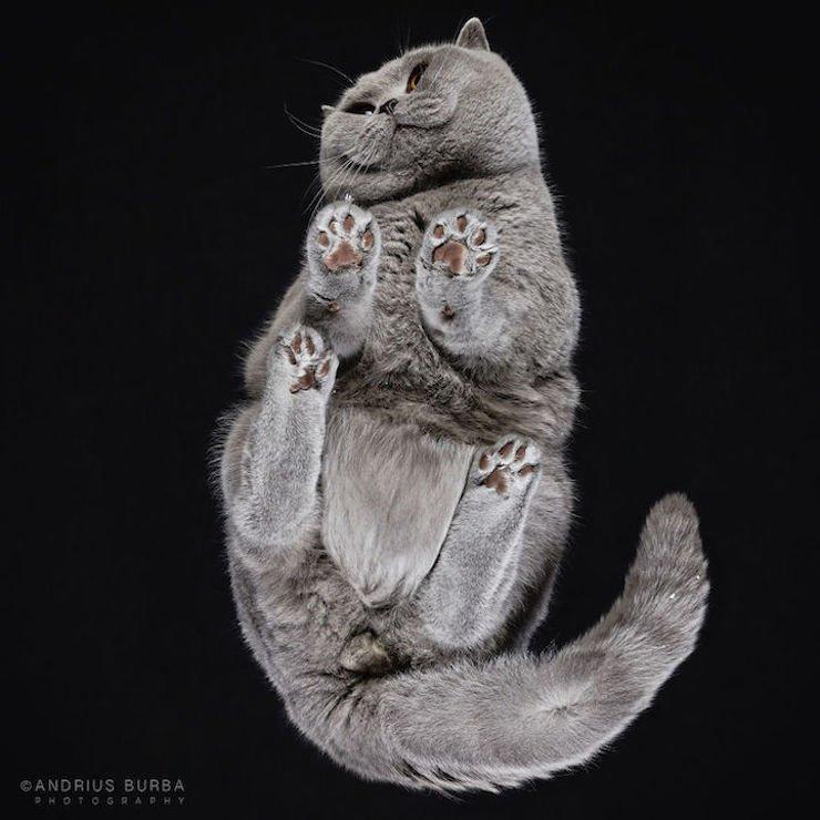 11 93.jpg?resize=300,169 - [Photos] Il photographie les chats vues d'en dessous et le résultat est unique!