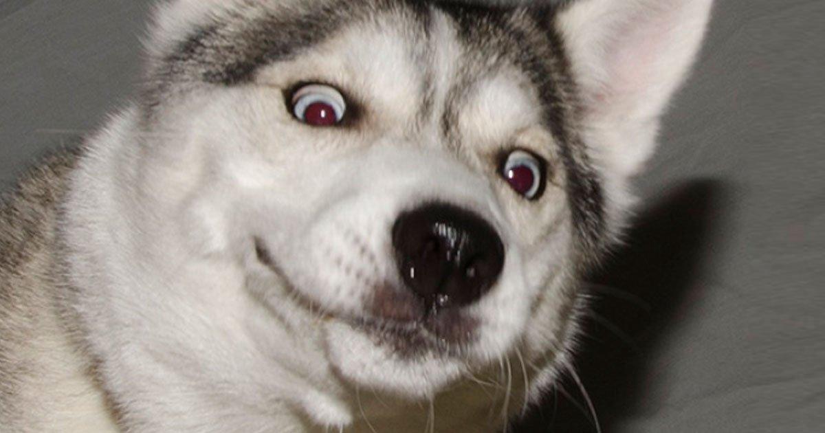 11 98.jpg?resize=1200,630 - 23 Animales expresivos cuya reacción es invaluable