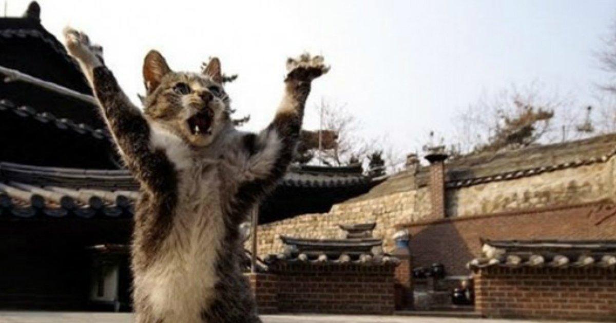 12 15.jpg?resize=1200,630 - 21 Sneaky Cats Acting Just Like Ninjas