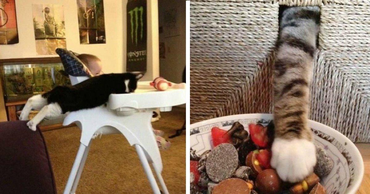 12 26 1.jpg?resize=1200,630 - 31 photos hilarantes prouvant que les chats sont les meilleurs voleurs du règne animal