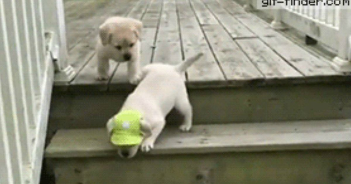 12 66.jpg?resize=1200,630 - 21 Puppies and Dogs Losing the Battle Against Stairs
