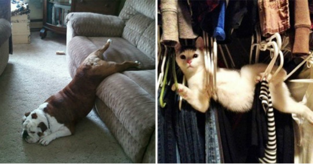 12 9.jpg?resize=1200,630 - The 24 funniest photos of cats and dogs struggling against human furniture