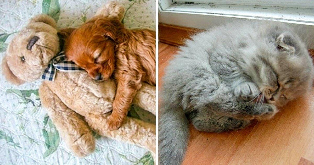 123.jpg?resize=412,275 - 23 Fotos de animais dormindo que são um infinito de fofura