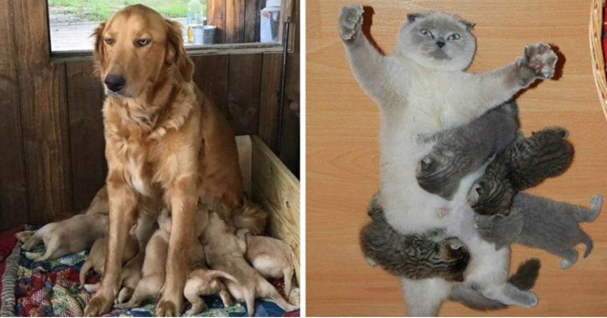 13 1.jpg?resize=636,358 - 16 Animal Pictures That Perfectly Depict What It's Like To Be A Parent