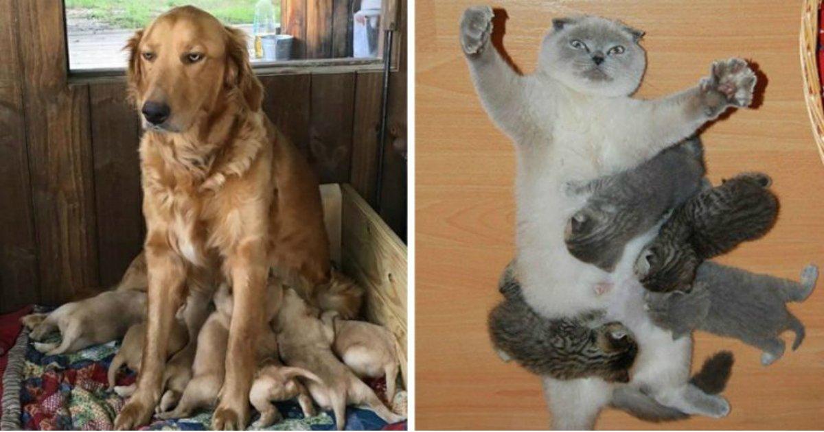 13 1.jpg?resize=636,358 - 16 Tierbilder, die zeigen, wie es ist, Eltern zu sein