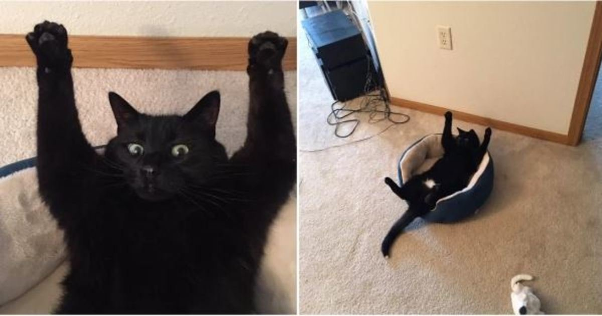 14 48.jpg?resize=1200,630 - 18 Wholesome Memes About Cats That Will Make You Laugh