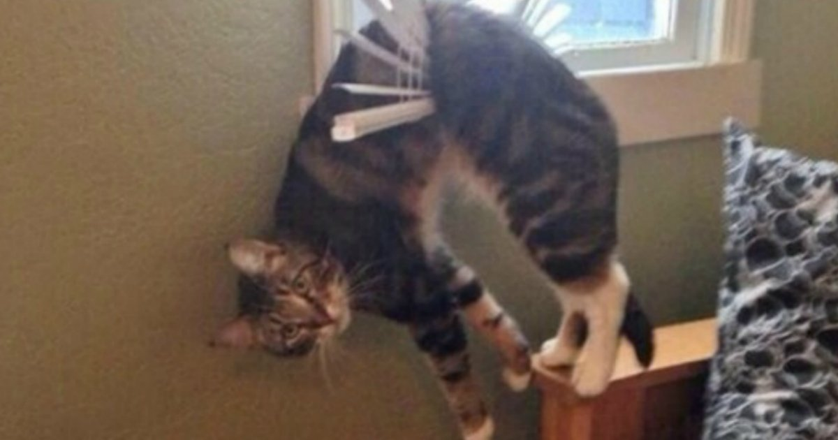 15 5.jpg?resize=1200,630 - 27 Hilarious Cats Who Totally Forgot How To Cat