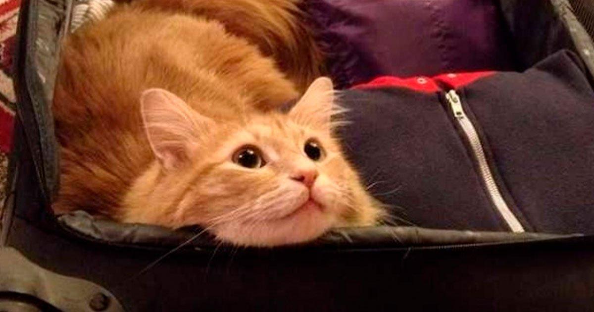 16 26.jpg?resize=1200,630 - Descubre 20 cosas increíbles que suceden cuando tienes un gato