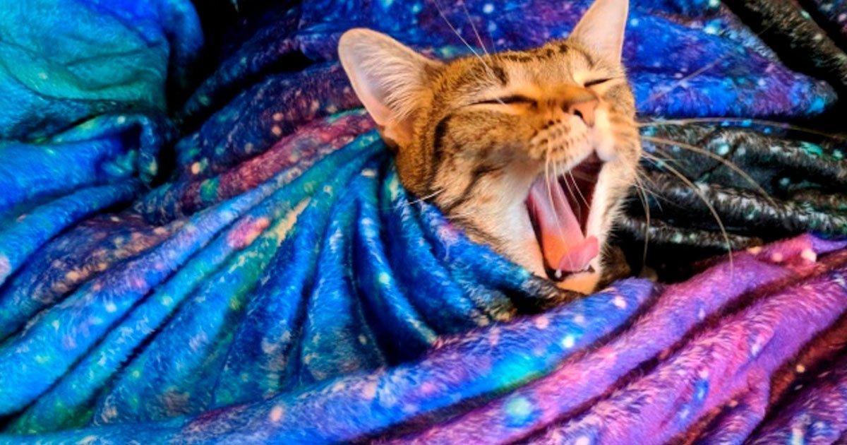 16 27.jpg?resize=1200,630 - 20 Fotos fantásticas que revelan toda la magia de los gatos