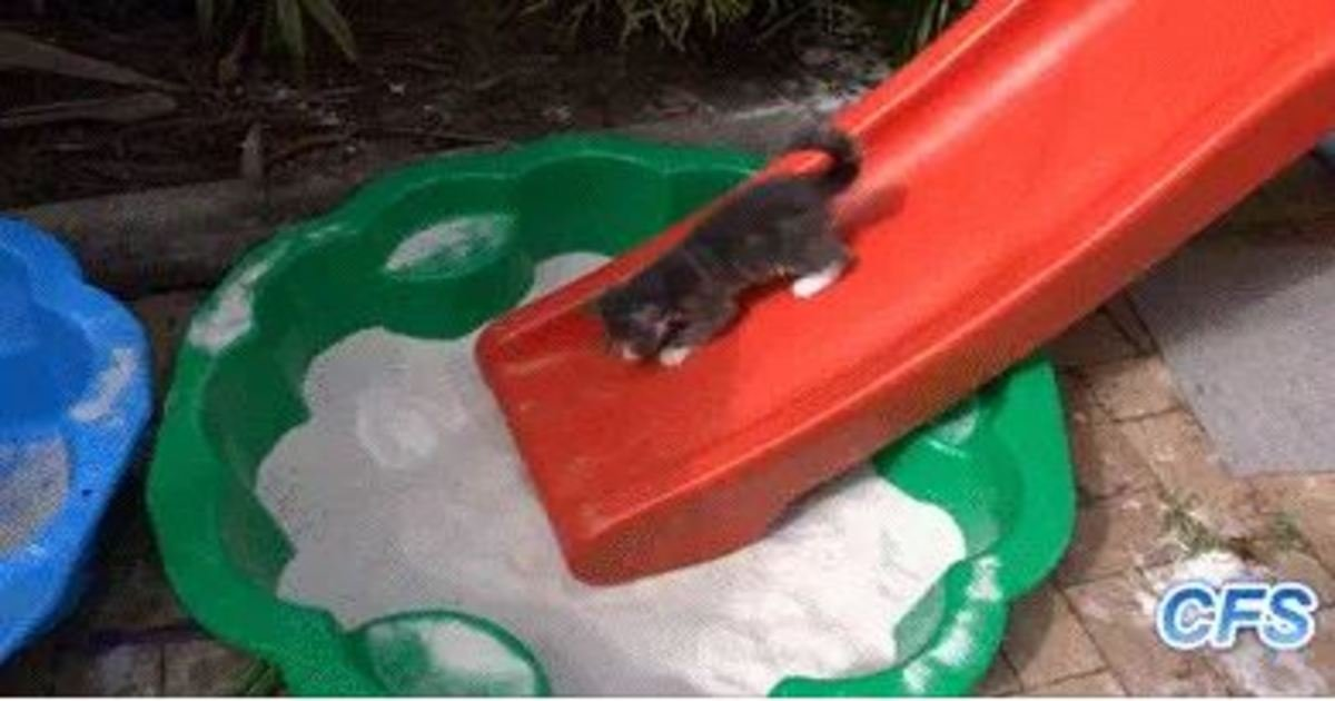17 29.jpg?resize=1200,630 - 22 Animals Struggling to Master the Art of Sliding