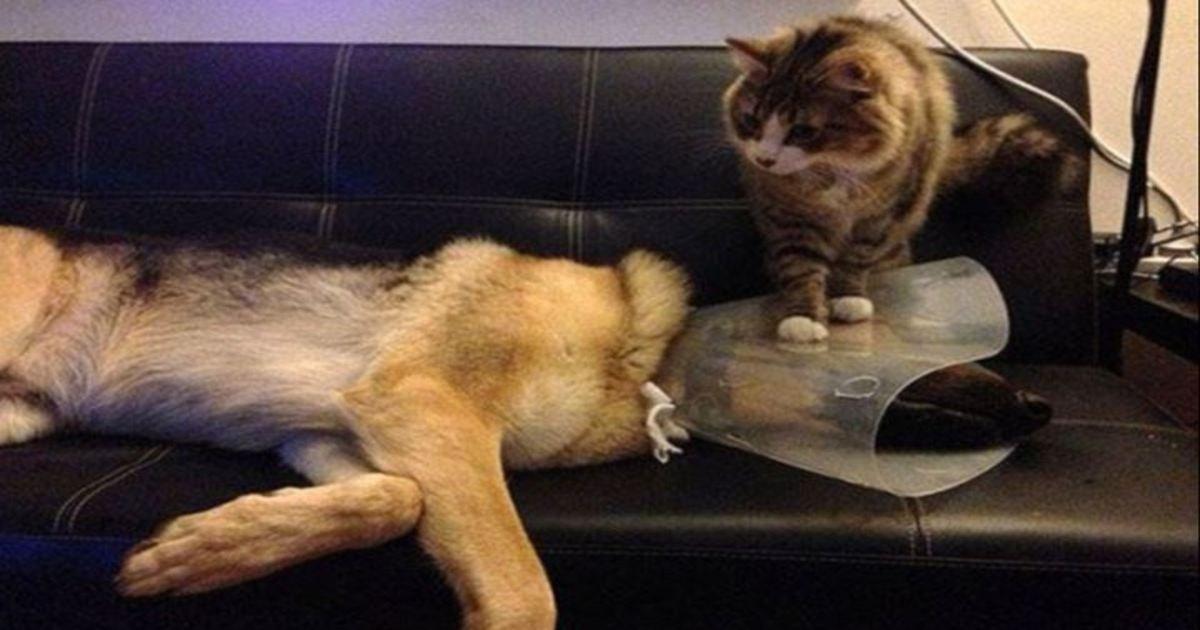 17 8.jpg?resize=1200,630 - 22 Fotos, die beweisen, dass Katzen echtes 'Badass' sein können