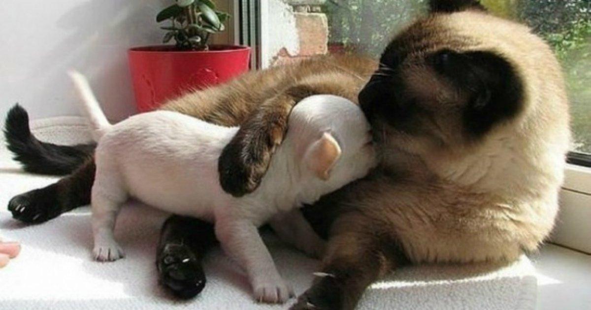18 2 1.jpg?resize=1200,630 - 20 gentils chats qui sont tombés amoureux des toutous.
