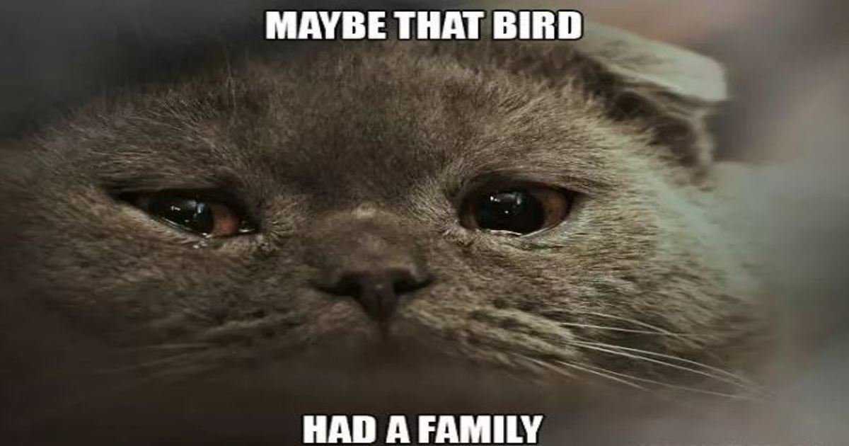 18 23.jpg?resize=636,358 - 18 Hilarious Sad Cat Problems That Might Explain Why Your Cat's So Moody