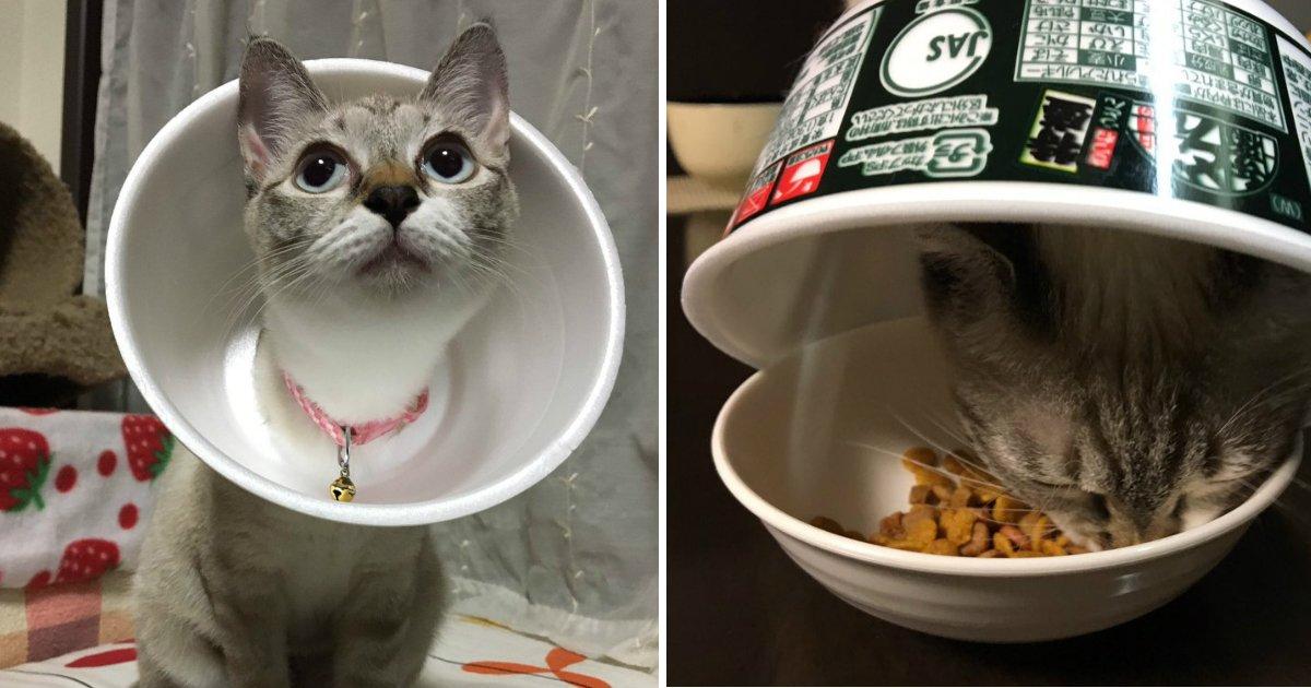 181006 110.jpg?resize=300,169 - 日本網友用泡麵碗充當貓咪手術後的頭套,蠢萌模樣融化推特網民的心