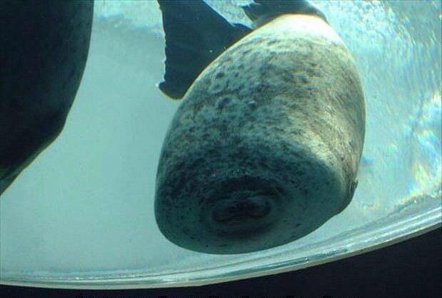 """""""Esto ocurre cuando una foca choca contra un vidrio"""". – SirGrimes, Reddit"""