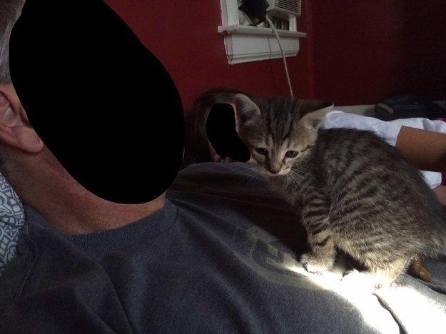 """""""Si miran al gato verán que está en medio del proceso de hacer caca y no lo noté hasta después de tomar la fotografía"""". – mangoandmoe"""