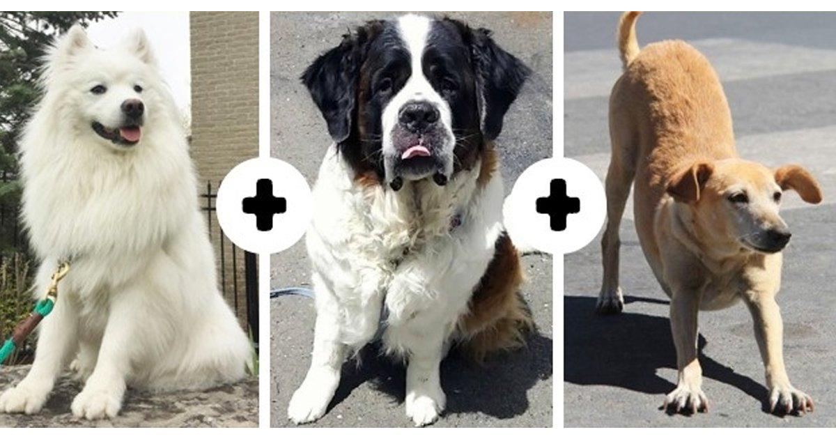 2 1.jpg?resize=1200,630 - 10 Encantadores razas de perros que casi nadie conoce