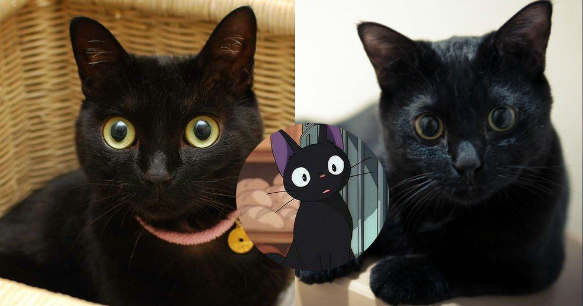 """2 117.jpg?resize=1200,630 - 【衝撃】""""インスタ映えしない""""→黒猫を手放す人が増加中?…一体何があった?"""
