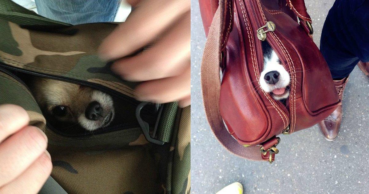 2 159.jpg?resize=1200,630 - 20 Precious Pups In Bags