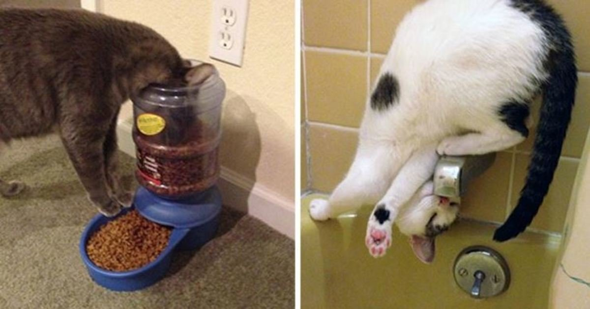 2 257.jpg?resize=1200,630 - 16 Hilarious Photos Proving That Cats Think Different