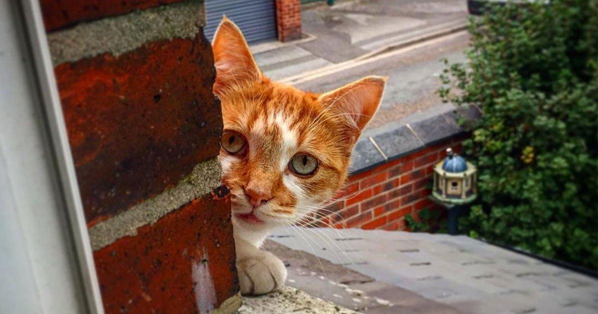 2 292.jpg?resize=412,232 - 17 Personas que no pensaban tener gatos pero los gatos les llegaron solos