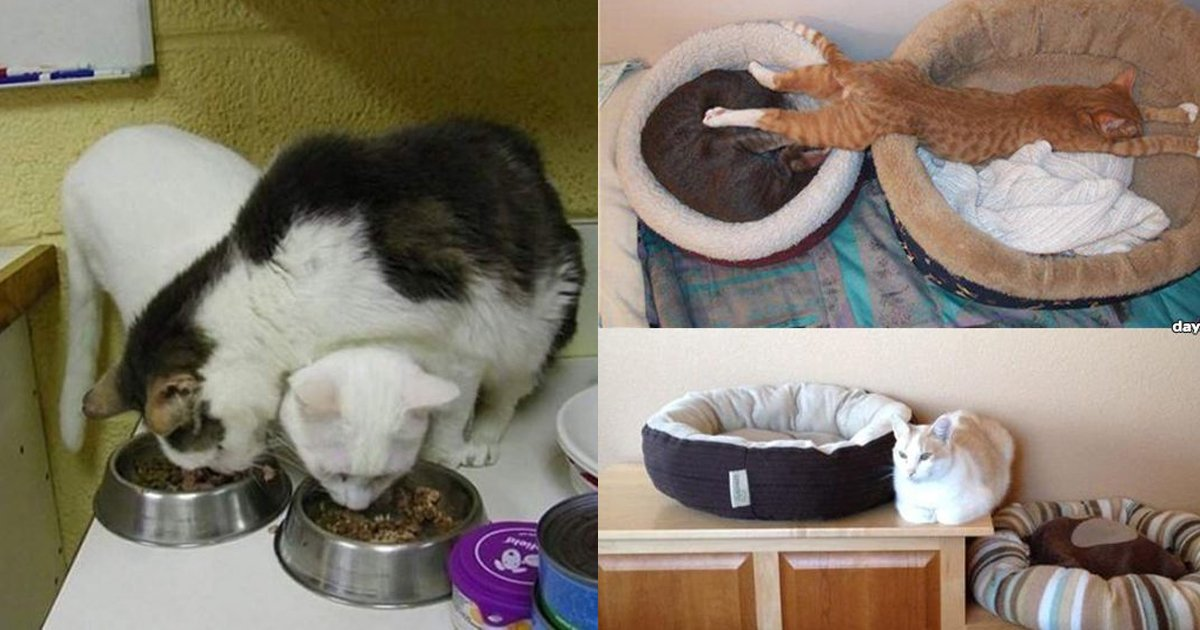 2 293.jpg?resize=1200,630 - 20 Hilarious Photos That Perfectly Explain Cat Logic